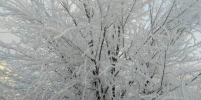 """Зима в """"Лесной сказке"""""""
