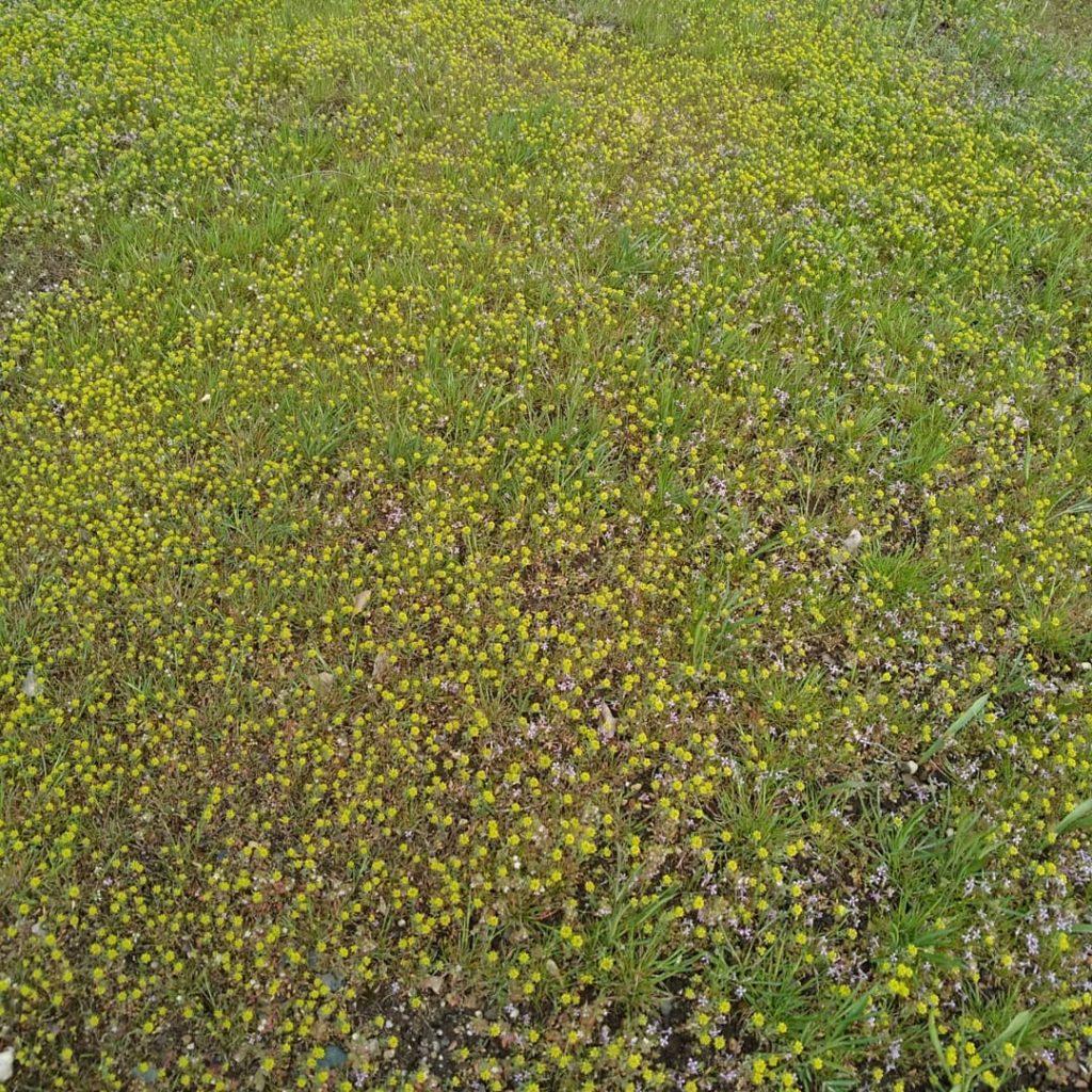 Первые цветы в окрестностях лагеря Лесная сказка город Орск